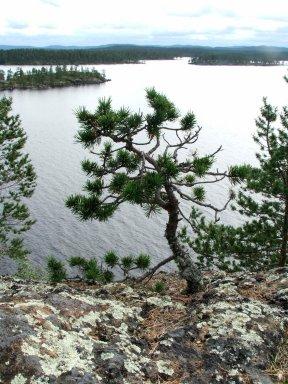 Pin Finlanda