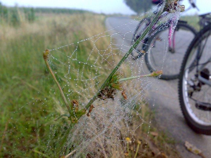 pe un drum de țară din România