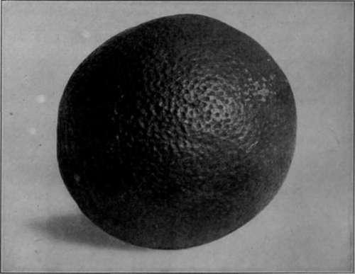 Portocala într-o fotografie ortocromatică